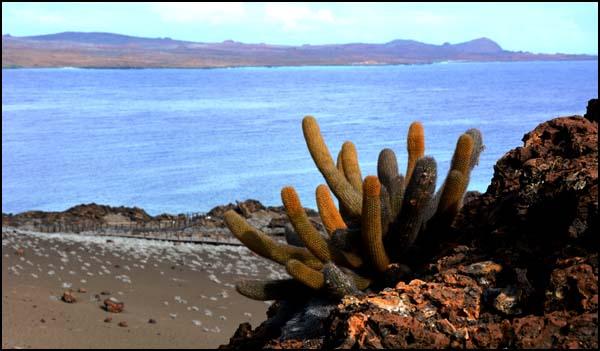 Equateur galapagos ile santiago et bartholome for Cactus santiago